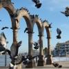 Palomas en Los Arcos del Malecón de Puerto Vallarta