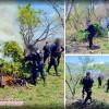 Hallan y Destruyen Cinco Sembradíos de Marihuana en Ixtlán del Río