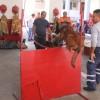 Participará Puerto Vallarta en el Ejercicio Nacional de Búsqueda y Rescate 2014 con binomios caninos K-9