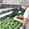 México y EEU fortalecen integración comercial de productos agroalimentarios: Sagarpa