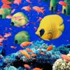Ahora solo queda la mitad de la biodiversidad marina que solía existir