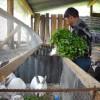 Mejora la calidad del empleo entre los jóvenes rurales de América Latina