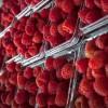 Jalisco, líder en producción de frambuesas y arándanos