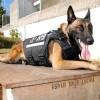 Perros adoptados integran unidad canina especializada de la Fiscalía del Estado de Jalisco