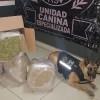 Binomio canino localiza droga en paqueteria de GDL