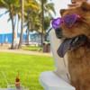 """Cuenta Puerto Vallarta con hoteles """"pet friendly"""" y actividades para las mascotas"""